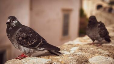 SKLOE-Dubrovnik-1004377