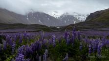 skloe-iceland-10203461